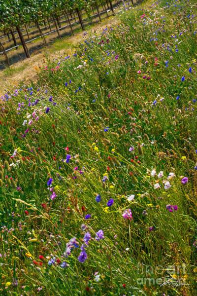 Photograph - Country Wildflowers I   by Shari Warren