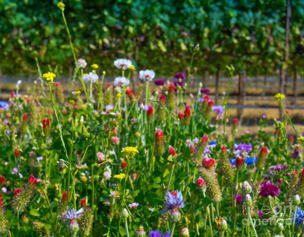Photograph - Country Wildflowers II by Shari Warren