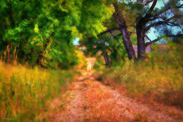 Photograph - Countryside Tree Lane by Anna Louise