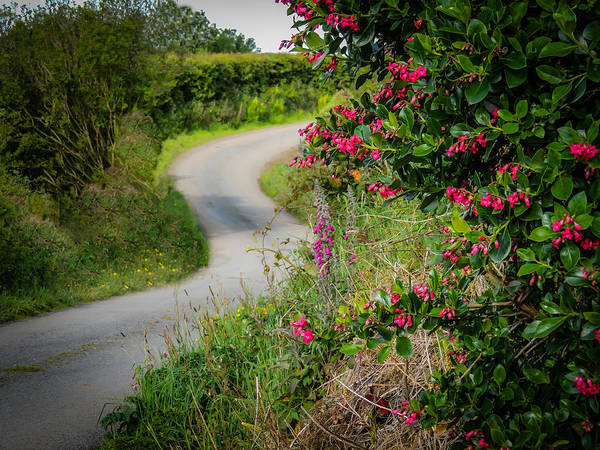 Photograph - County Clare Country Road by James Truett
