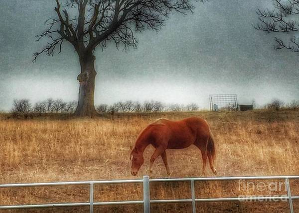 Photograph - County Road 4100 by Jenny Revitz Soper