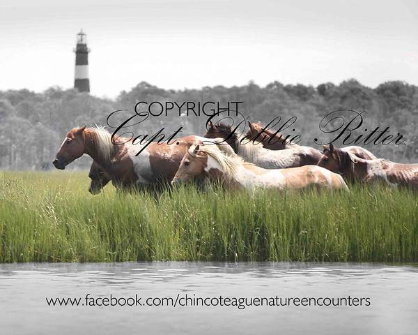 Photograph - Cournteys Boy And Whisper Swim 2014 by Captain Debbie Ritter