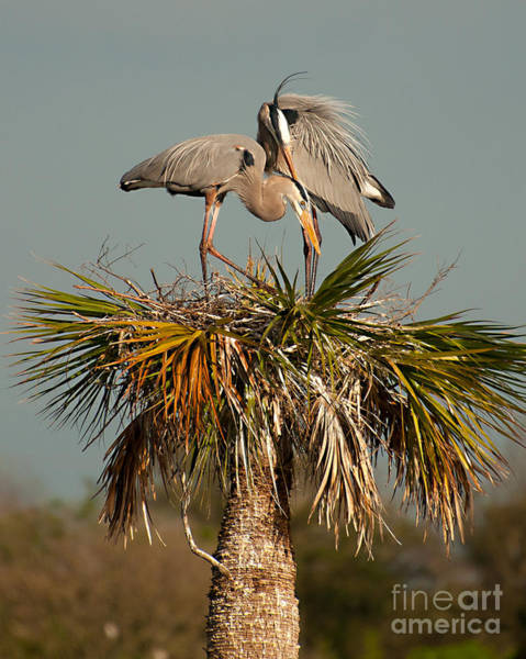 Photograph - Courtship by Photos By Cassandra