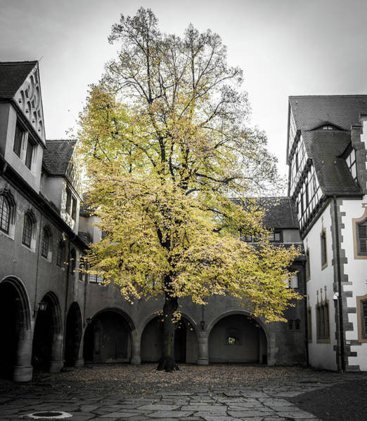 Wall Art - Photograph - Courtyard Tree by Kyle Goetsch