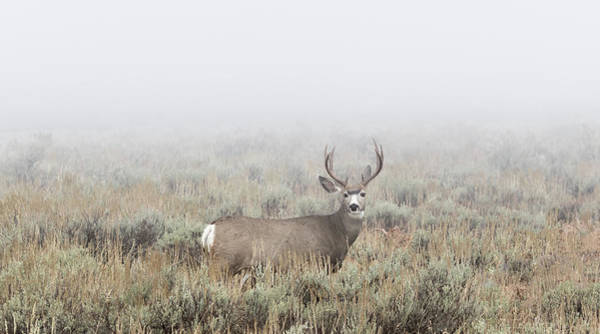 Photograph - Covered In Fog by Ronnie and Frances Howard