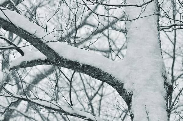 Covered In White Art Print by JAMART Photography