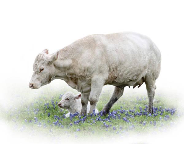 Cow And Calf Wall Art - Photograph - Cow And Calf by David and Carol Kelly