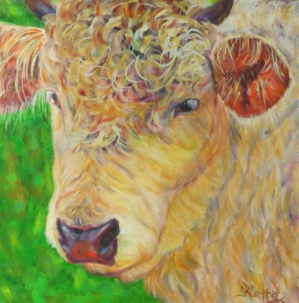 Hereford Bull Painting - Cute And Curly Cow by Sandra Reeves