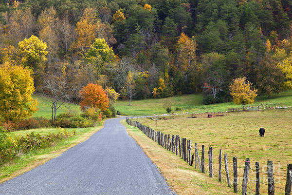 Photograph - Cow Pasture In The Fall by Jill Lang