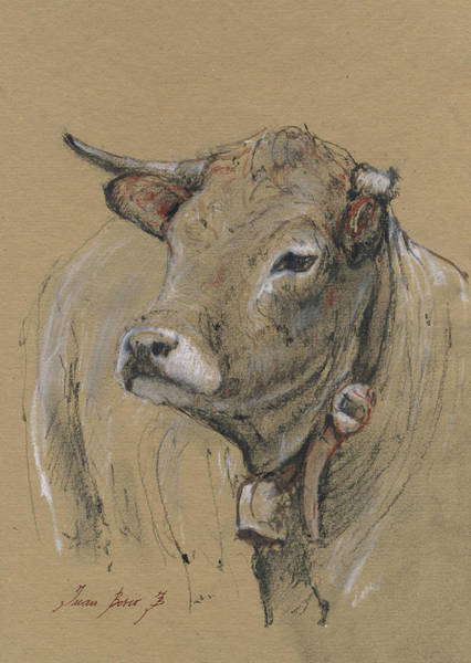 Wall Art - Painting - Cow Portrait Painting by Juan Bosco