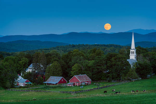 Moonrise Photograph - Cow Under The Moon by Michael Blanchette