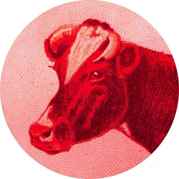 Farms Digital Art - Cow Vi by Desiree Warren