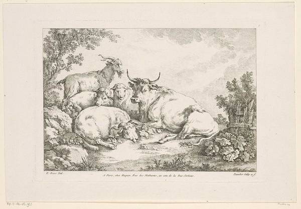 African Penguin Painting - Cow With Sheep And Goats, Balthasar Anton Dunker, After Johann Heinrich Roos, 1769 - 1772 by Johann Heinrich Roos