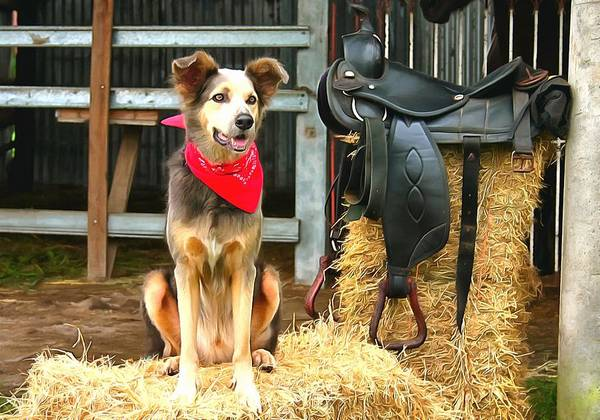 Photograph - Cowboy Dog by Studio Artist