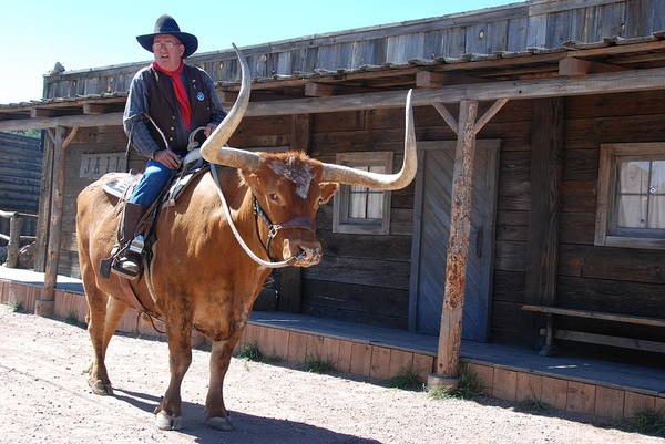 Photograph - Cowboy Is Riding Texas Long Horn Steer by Irina ArchAngelSkaya