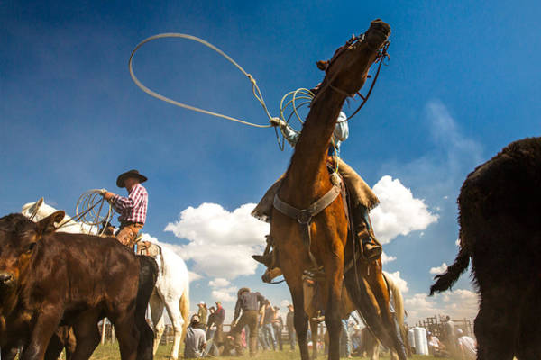 Roping Photograph - Cowboy Noir by Todd Klassy