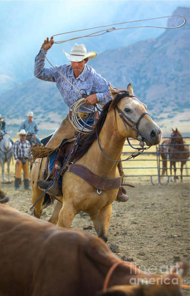 Roping Photograph - Cowboy Roping A Steer by Diane Diederich