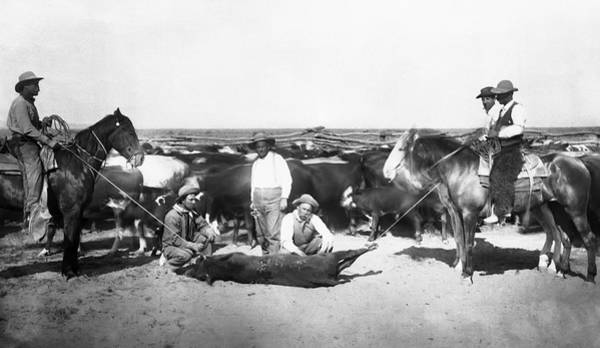 Wall Art - Photograph - Cowboys Branding Cattle C. 1900 by Daniel Hagerman