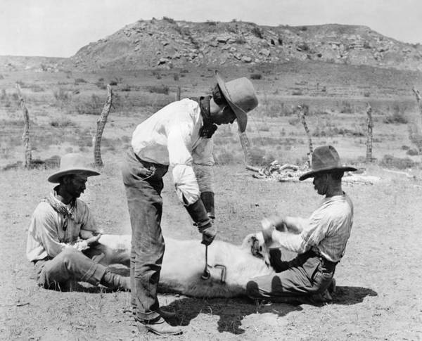 Branding Iron Photograph - Cowboys: Branding Cattle by Granger