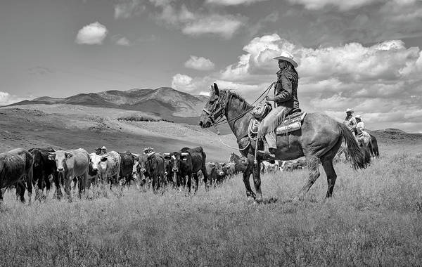 Photograph - Cowgirl Driving The Herd by Rick Mosher