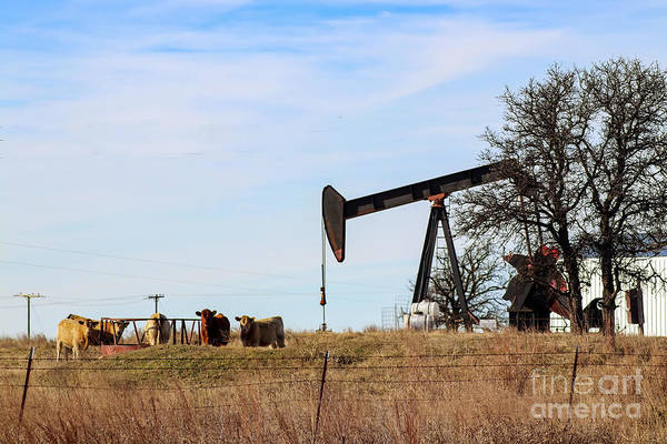 Photograph - Cows And Oil Well by Susan Vineyard