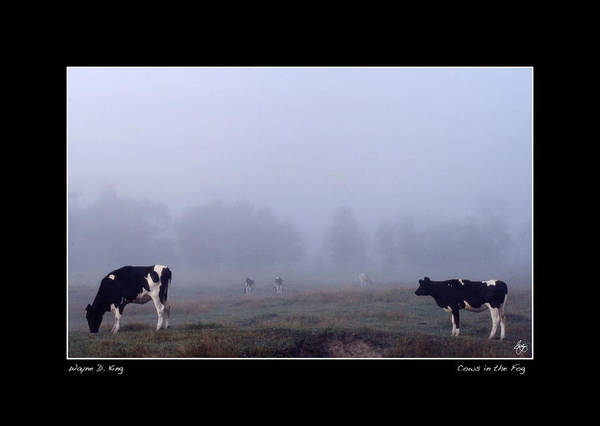 Photograph - Cows In The Fog Poster by Wayne King