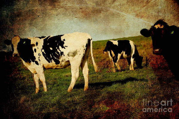 Photograph - Cows On A Hill 2 . Texture by Wingsdomain Art and Photography