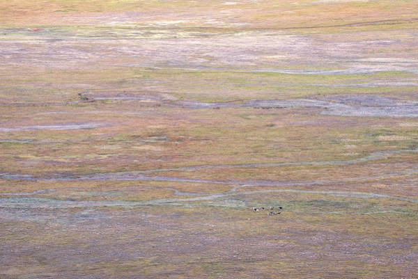 Photograph - Cows On Pastel Pastures by Alexander Kunz
