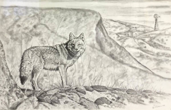 Weeds Drawing - Coyote by Bern Miller