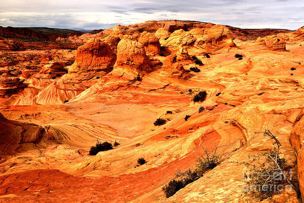 Photograph - Coyote Buttes Brain Rocks by Adam Jewell