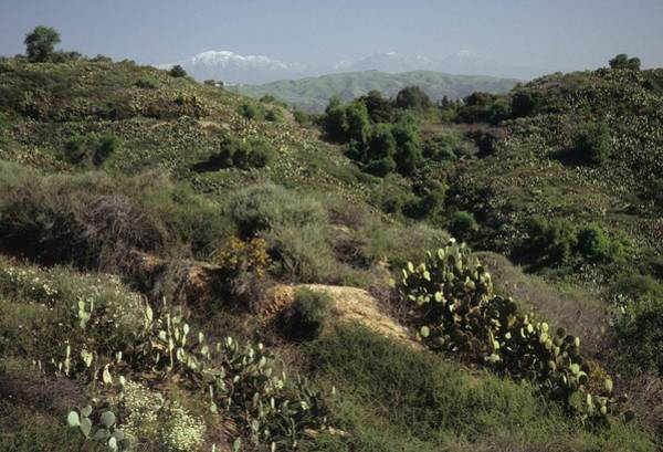Photograph - Coyote Hills And Snow Capped Mountain by Don Kreuter