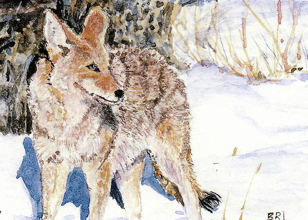 Painting - Coyote In The Snow by Barry Jones