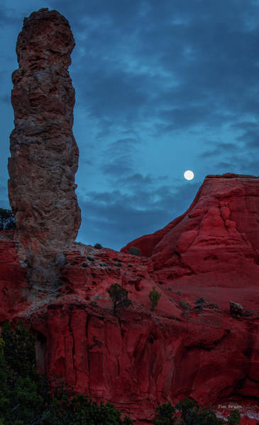 Photograph - Coyote Moon  by Tim Bryan