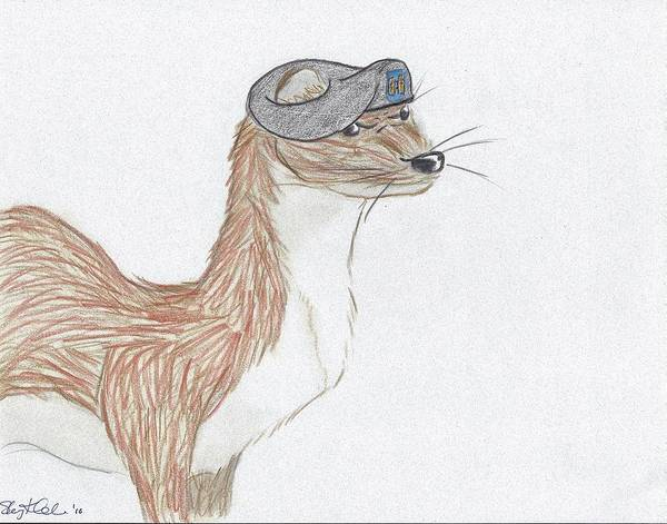 Furry Drawing - Cpt Weasel by Sherry Klander