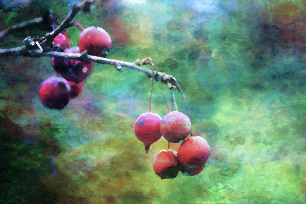 Photograph - Crab Apple Impression 5587 Idp_2 by Steven Ward