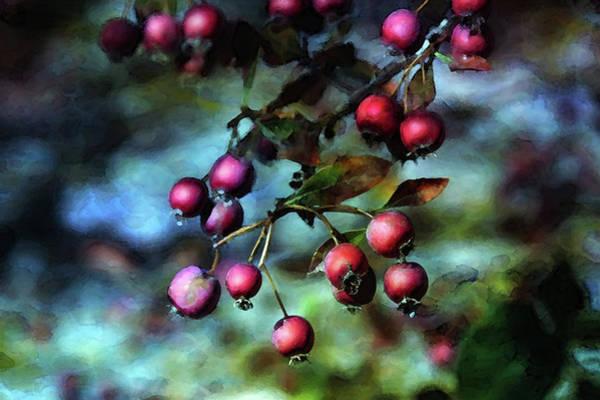 Photograph - Crab Apples 5935 Dp_2 by Steven Ward