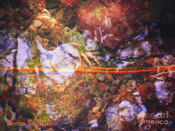 Photograph - Crab In River by Donna L Munro