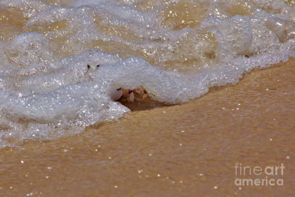 Photograph - Crab In The Surf by Jeremy Hayden