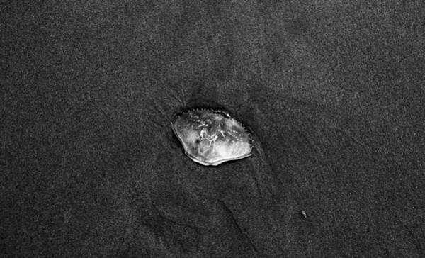Photograph - Crab Shell  by HW Kateley