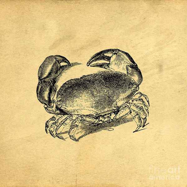 Wall Art - Drawing - Crab Vintage by Edward Fielding