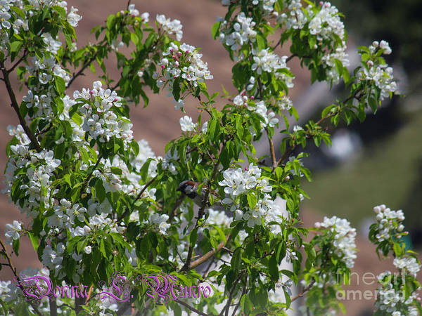 Photograph - Crabapple Blossom And Bird by Donna L Munro