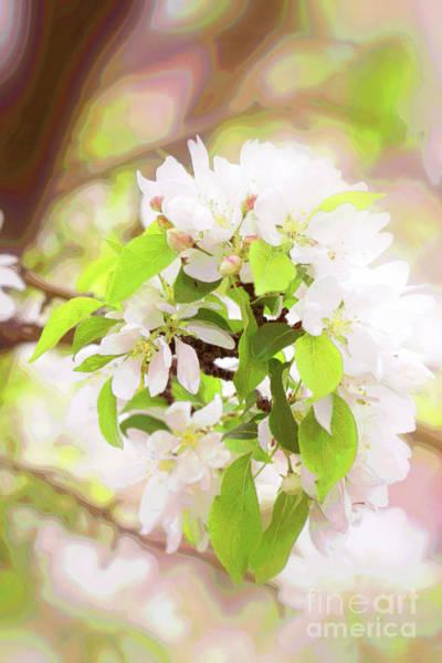 Photograph - Crabapple Blossom White by Donna L Munro