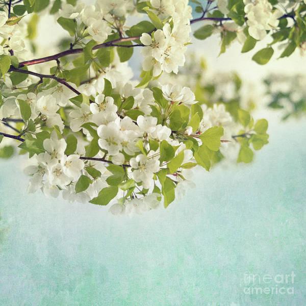 Crab Photograph - Crabapple Blossoms by Priska Wettstein