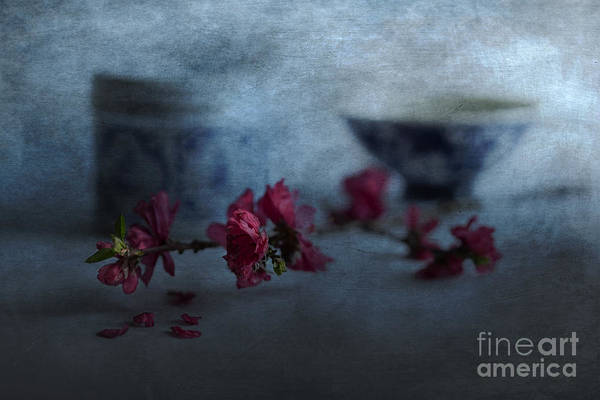 Wall Art - Photograph - Crabapple by Elena Nosyreva