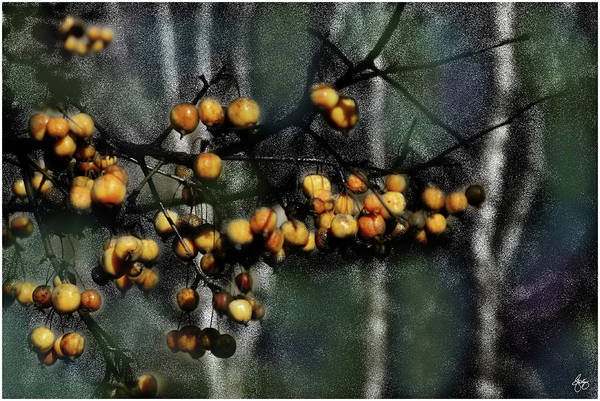 Photograph - Crabapple Gold by Wayne King