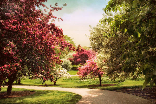 Photograph - Crabapple Trees by Jessica Jenney