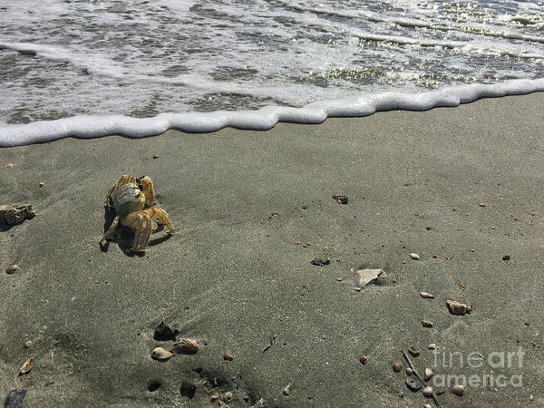 Photograph - Crabby Charlie By The Shore by Dale Powell