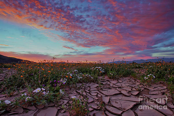Photograph - Crack Of Dawn by Sam Antonio Photography