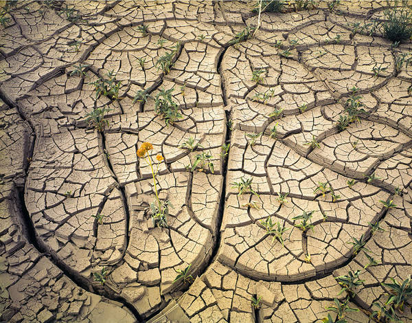 Photograph - 317805-cracked Mud Patterns  by Ed  Cooper Photography