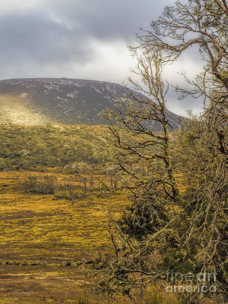 Photograph - Cradle Mountain, Tasmania, Australia by Elaine Teague